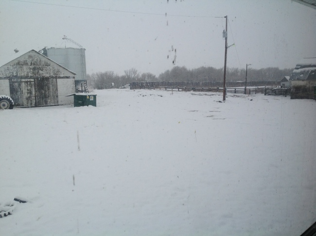 Yard in snow