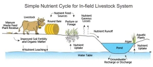 Simple Land Nutrient Cycle (Source: Agriculture Canada)